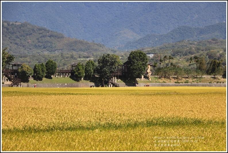 池上黃金稻田-2020-10-51.jpg