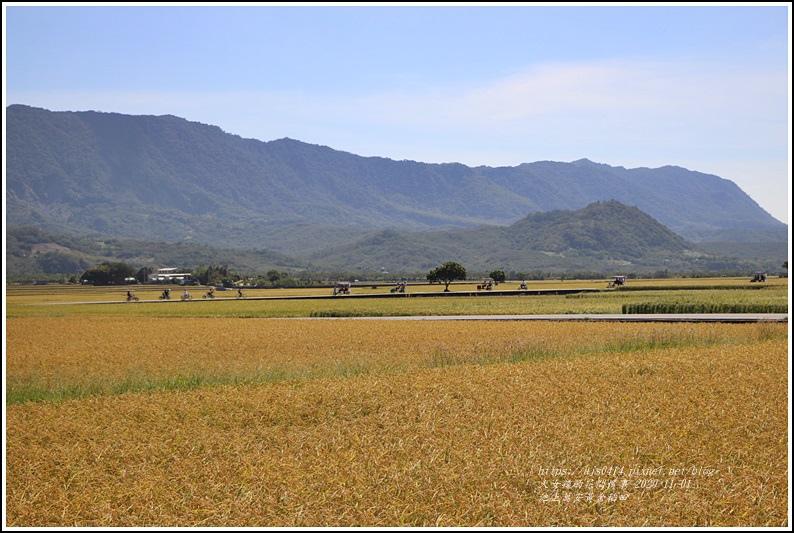 池上黃金稻田-2020-10-49.jpg