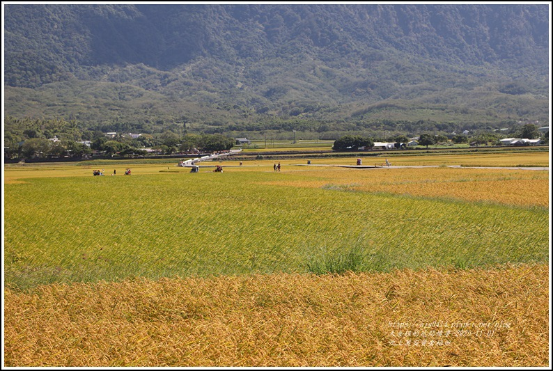 池上黃金稻田-2020-10-48.jpg