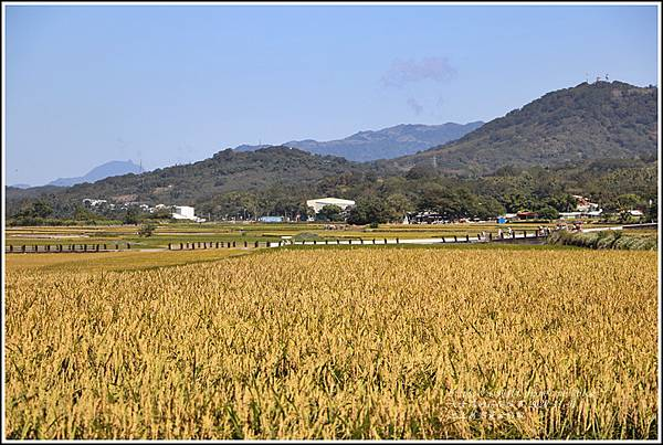 池上黃金稻田-2020-10-45.jpg