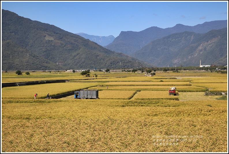 池上黃金稻田-2020-10-44.jpg