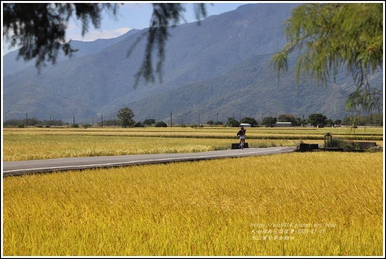 池上黃金稻田-2020-10-33.jpg