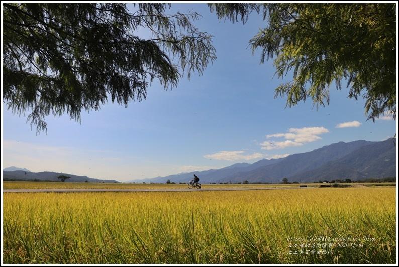 池上黃金稻田-2020-10-36.jpg