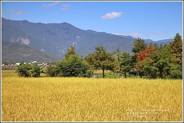 池上黃金稻田-2020-10-28.jpg