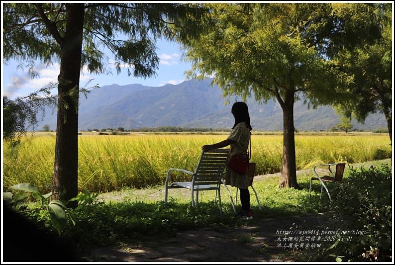 池上黃金稻田-2020-10-20.jpg