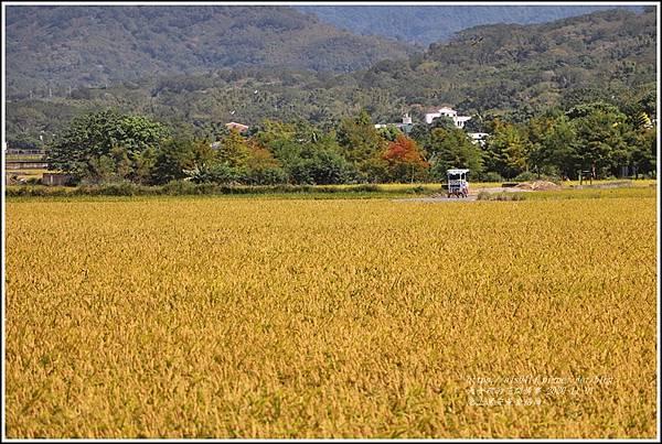 池上黃金稻田-2020-10-19.jpg