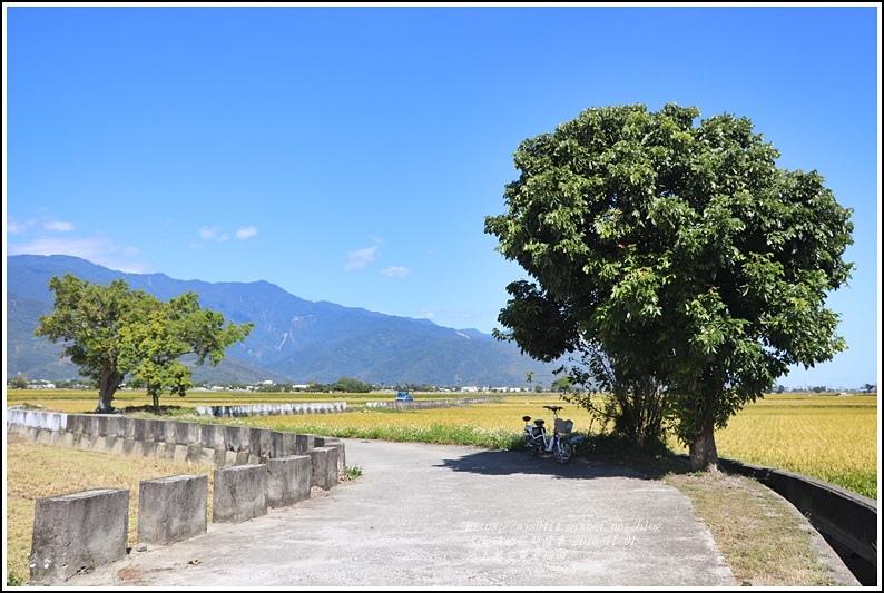 池上黃金稻田-2020-10-15.jpg