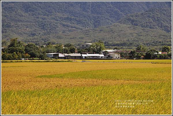 池上黃金稻田-2020-10-16.jpg