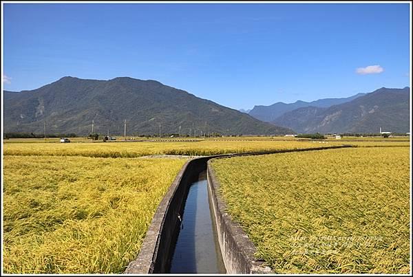 池上黃金稻田-2020-10-17.jpg