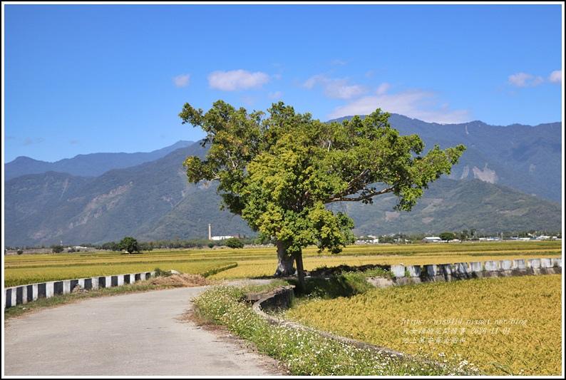 池上黃金稻田-2020-10-14.jpg