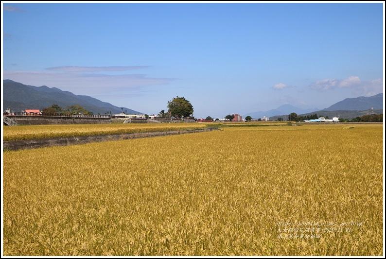 池上黃金稻田-2020-10-63.jpg
