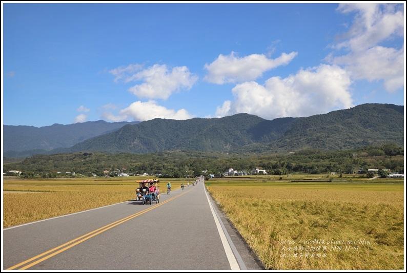 池上黃金稻田-2020-10-61.jpg
