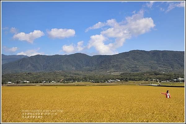 池上黃金稻田-2020-10-62.jpg
