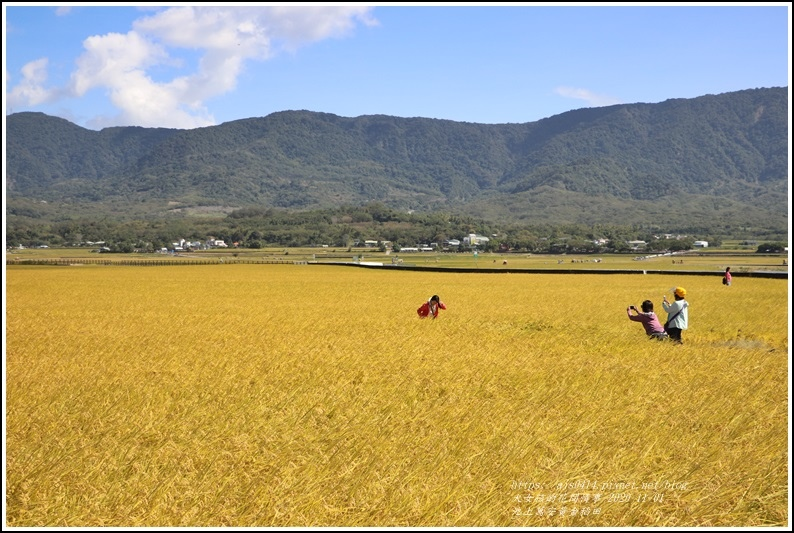池上黃金稻田-2020-10-60.jpg