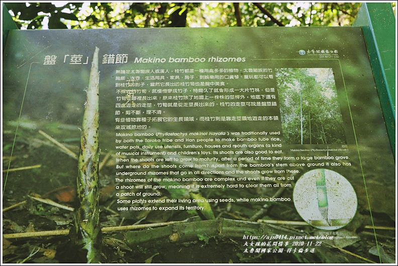 太魯閣國家公園得卡倫步道-2020-11-89.jpg
