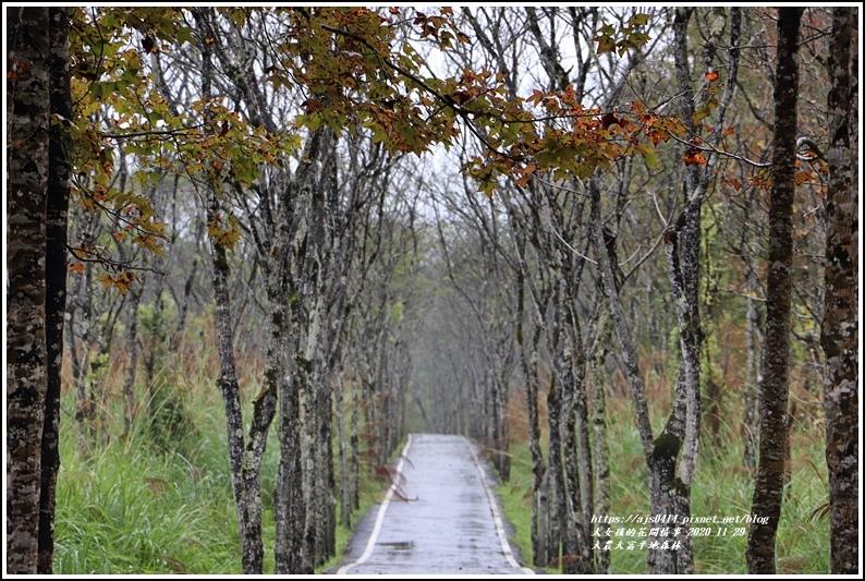 大農大富平地森林(楓林自行車道)-2020-11-06.jpg