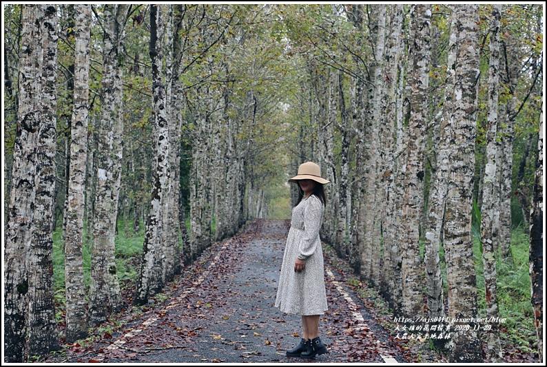 大農大富平地森林(楓林自行車道)-2020-11-03.jpg