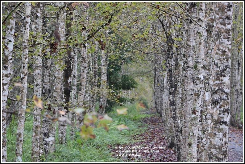 大農大富平地森林(楓林自行車道)-2020-11-09.jpg