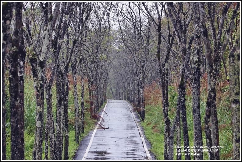大農大富平地森林(楓林自行車道)-2020-11-12.jpg