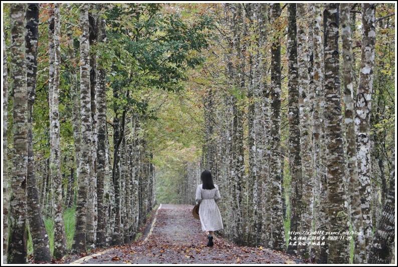 大農大富平地森林(楓林自行車道)-2020-11-18.jpg