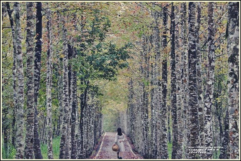 大農大富平地森林(楓林自行車道)-2020-11-22.jpg