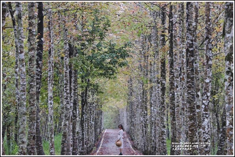 大農大富平地森林(楓林自行車道)-2020-11-21.jpg