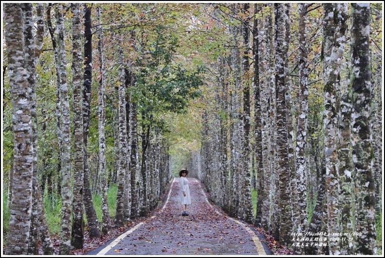 大農大富平地森林(楓林自行車道)-2020-11-23.jpg