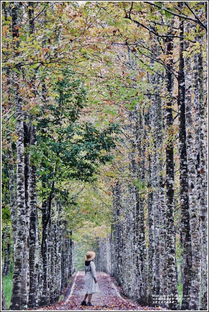 大農大富平地森林(楓林自行車道)-2020-11-19.jpg