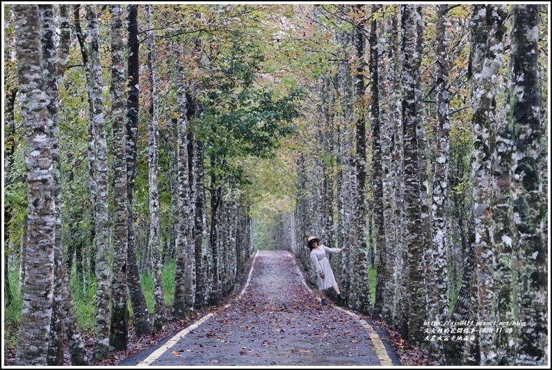 大農大富平地森林(楓林自行車道)-2020-11-24.jpg