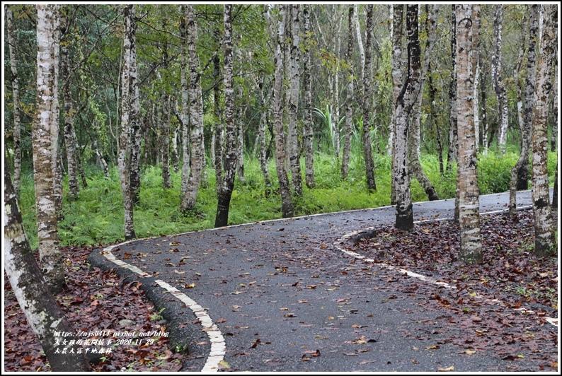 大農大富平地森林(楓林自行車道)-2020-11-29.jpg