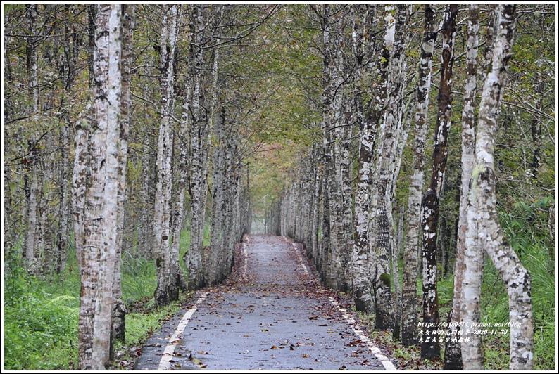 大農大富平地森林(楓林自行車道)-2020-11-30.jpg