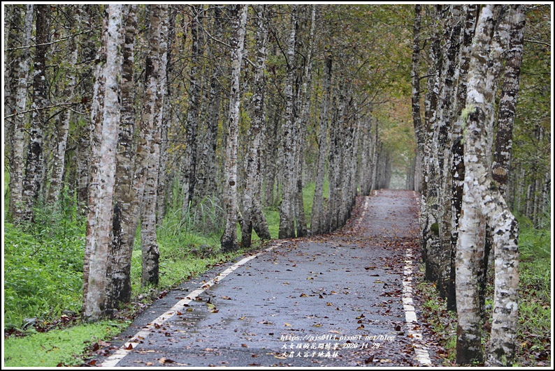 大農大富平地森林(楓林自行車道)-2020-11-32.jpg