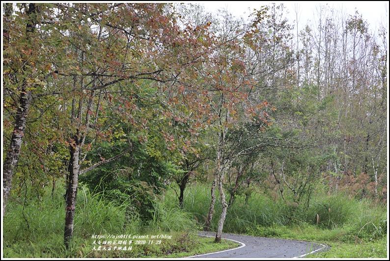 大農大富平地森林(楓林自行車道)-2020-11-33.jpg