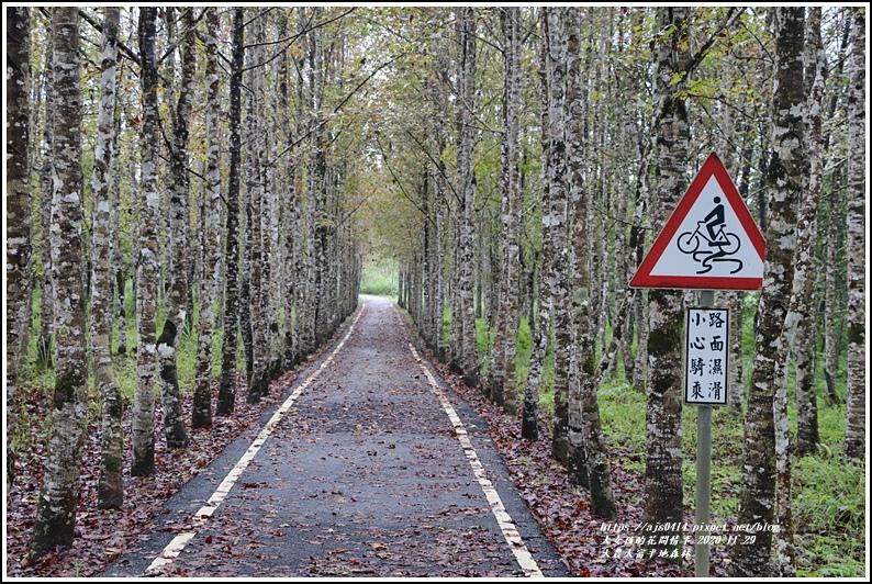 大農大富平地森林(楓林自行車道)-2020-11-36.jpg
