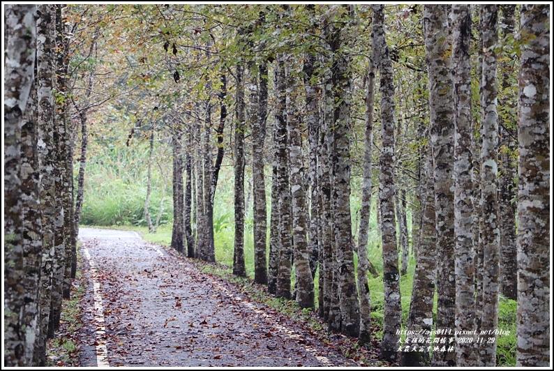 大農大富平地森林(楓林自行車道)-2020-11-35.jpg