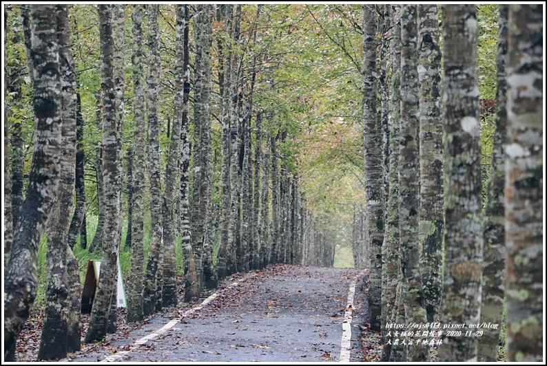 大農大富平地森林(楓林自行車道)-2020-11-37.jpg
