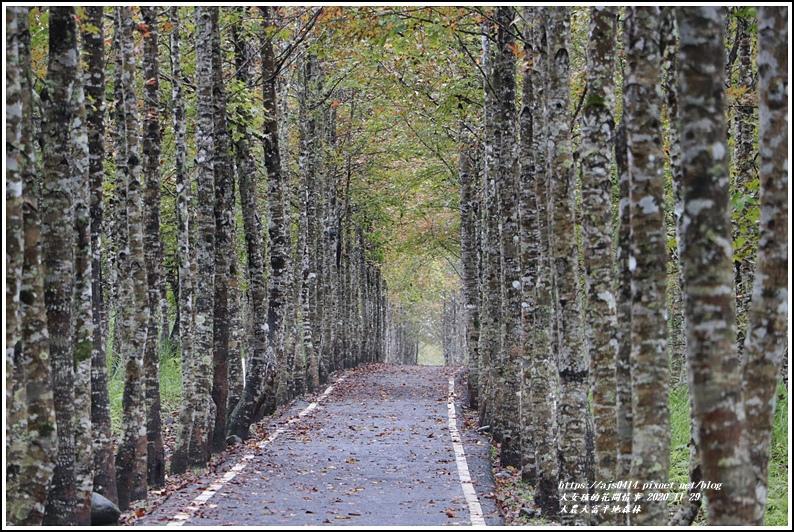 大農大富平地森林(楓林自行車道)-2020-11-38.jpg