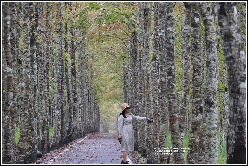 大農大富平地森林(楓林自行車道)-2020-11-44.jpg