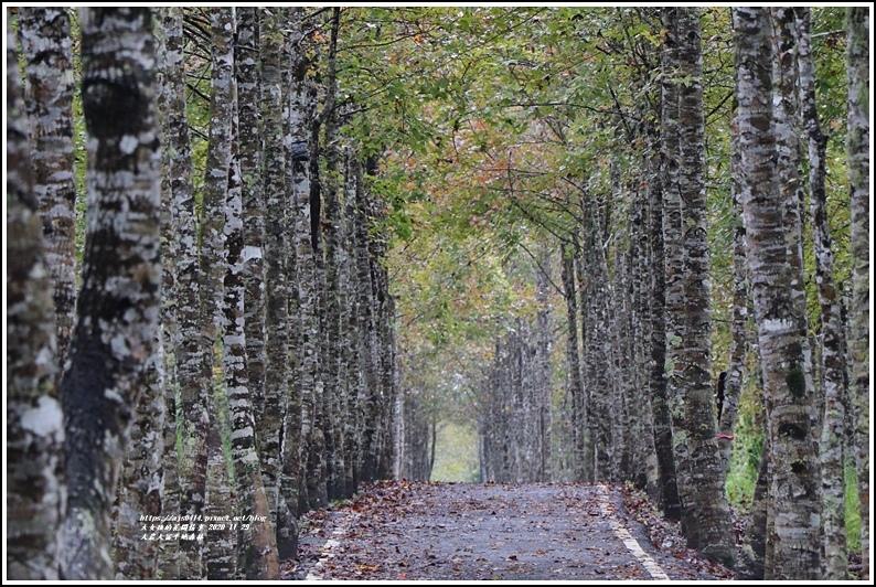 大農大富平地森林(楓林自行車道)-2020-11-45.jpg