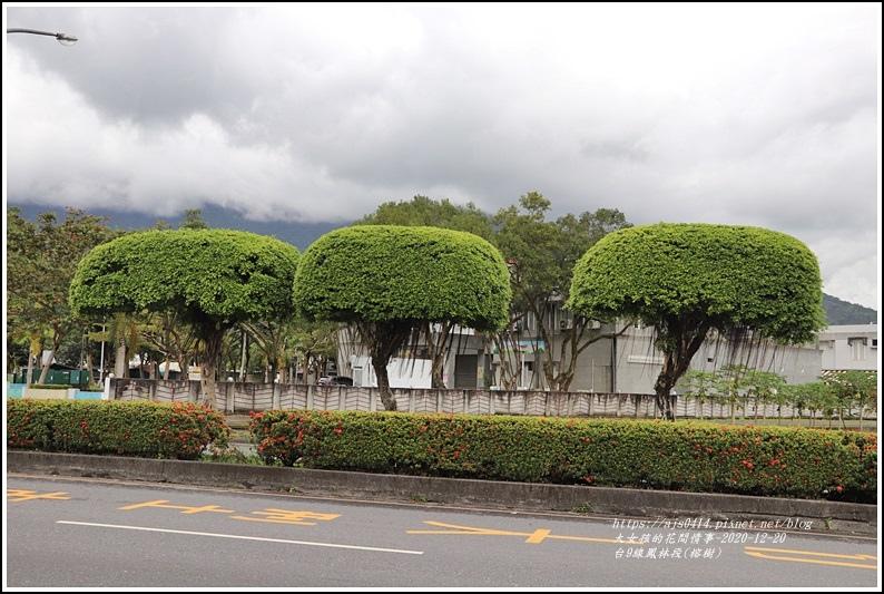 台9線鳳林段(榕樹)-2020-12-07.jpg