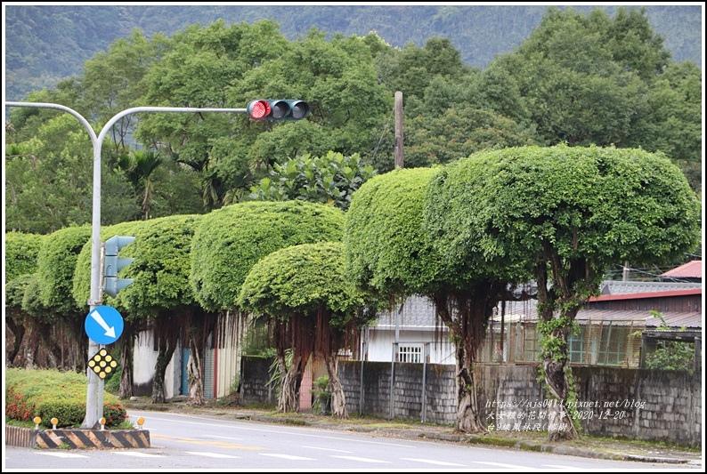 台9線鳳林段(榕樹)-2020-12-09.jpg
