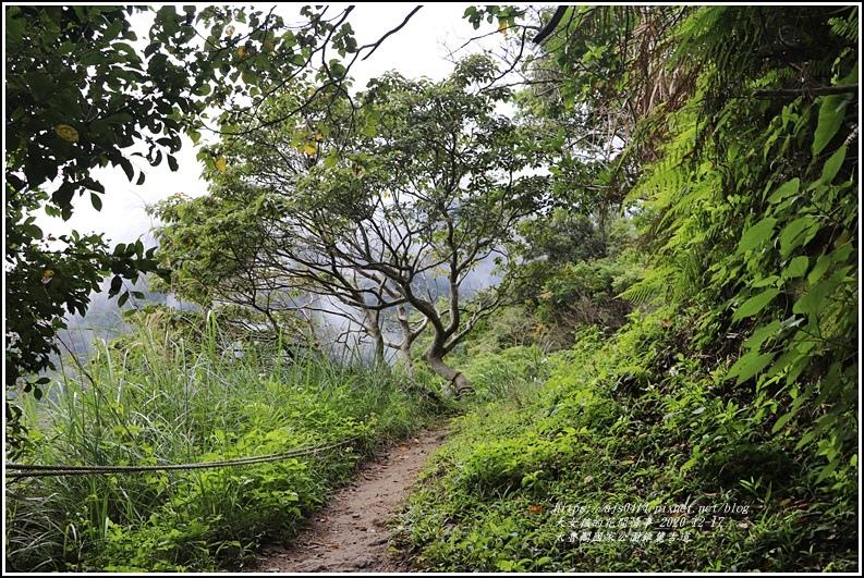 太魯閣國家公園錐麓古道-2020-12-75.jpg