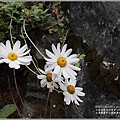 太魯閣國家公園錐麓古道-2020-12-138.jpg