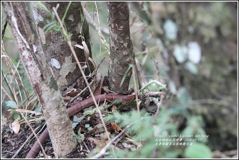 太魯閣國家公園錐麓古道-2020-12-213.jpg
