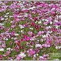 池上鄉農會花卉畫布-2021-01-19.jpg