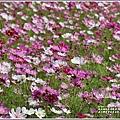 池上鄉農會花卉畫布-2021-01-38.jpg