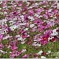 池上鄉農會花卉畫布-2021-01-39.jpg