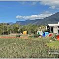池上鄉農會花卉畫布-2021-01-52.jpg
