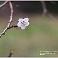 羅山梅花-2021-01-03.jpg