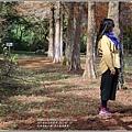 光復森林公園(落羽松)-2021-01-38.jpg